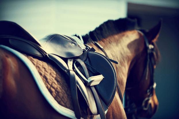 Horse 20200421165810